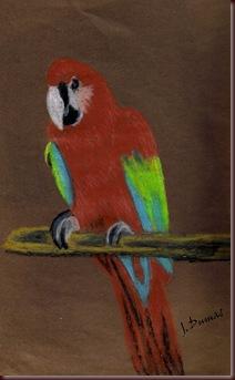perroquet avec mes prismacolor